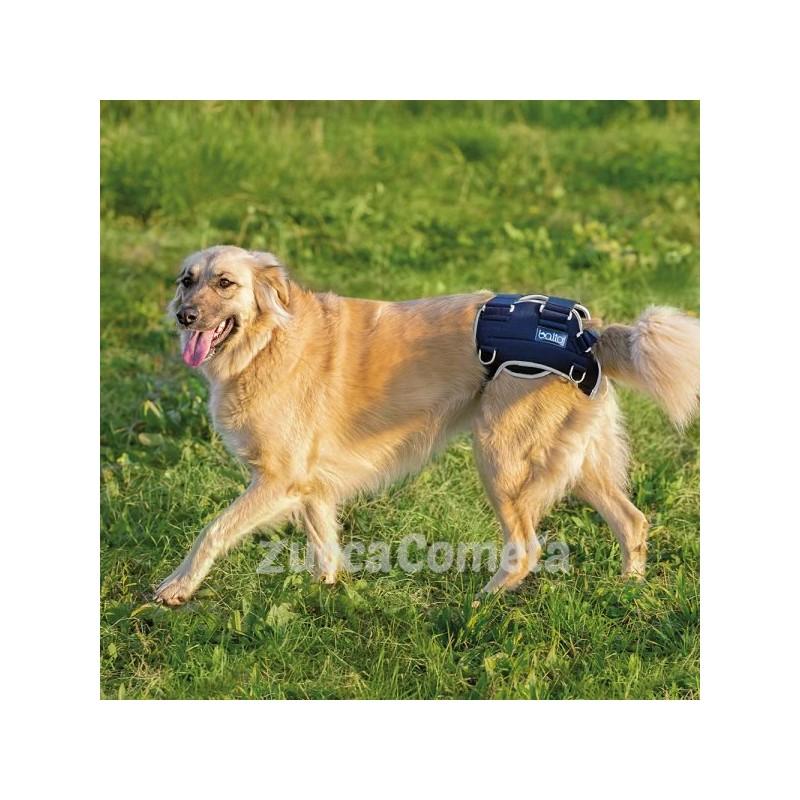 tutore per la displasia dell'anca nel cane