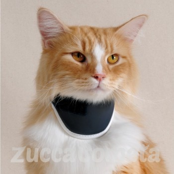 BT NECK CAT - collare ortopedico gatto - Balto