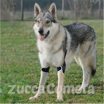 BT SOFT PLUS  - tutore per gomito doppio - cane - Balto