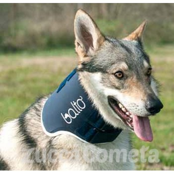 BT NECK - collare rigido cane - Balto