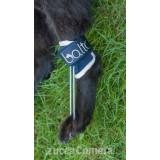 BT PULL - tutore per iperflessione delle falangi - cane - Balto