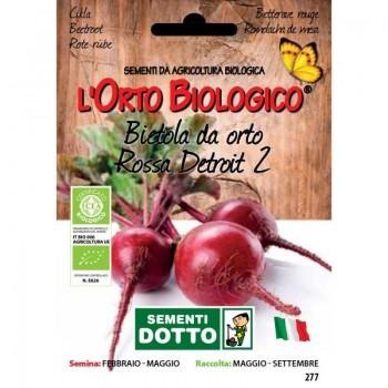 Barbabietola rossa Detroit 2 - Orto Biologico - Sementi Dotto