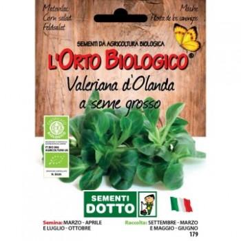 Valeriana d'Olanda a seme grosso - Orto Biologico - Sementi Dotto
