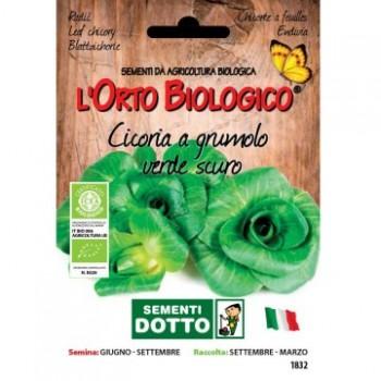 Cicoria a grumolo verde scuro - Orto Biologico - Sementi Dotto