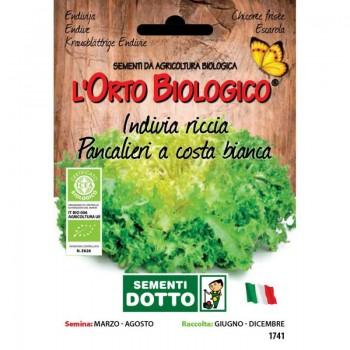 Indivia Scarola verde a cuore pieno - Orto Biologico - Sementi Dotto