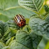 Homeoplant Cocciniglie – rinforza le difese delle piante - Flortis