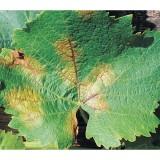 Fosfito di Potassio - concime - contro agenti fitopatogeni - Flortis