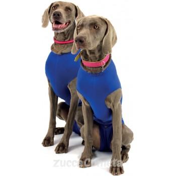 Recova Shirt – Maglietta protettiva antileccamento – JoyVet (Balto)