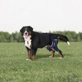 BT JUMP PLUS - tutore doppio per ginocchio - cane - Balto
